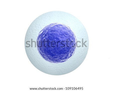 Human egg cell isolated on white background