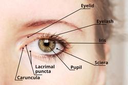 Human eye anatomy diagram - medical description.