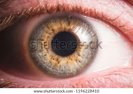 Human eye detail #1196228410