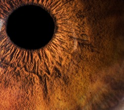 Human eye macro closeup
