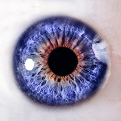 Human eye. macro shooting