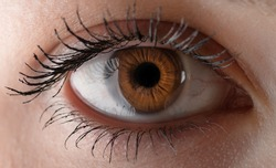 Human eye with reflection. Macro shot with shallow depth of field.