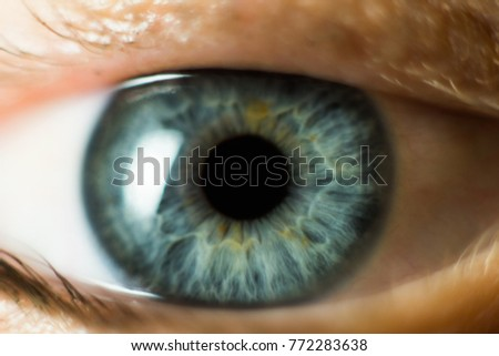 Human Female eye macro. Closeup shot of female gray - blue colour eye with day - Shutterstock ID 772283638