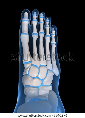 human foot - stock photo