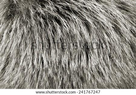 Human Hair texture background