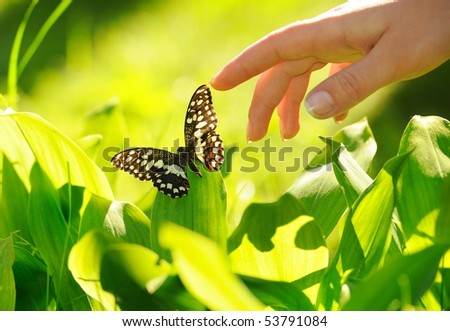 Human hand and beautiful butterfly