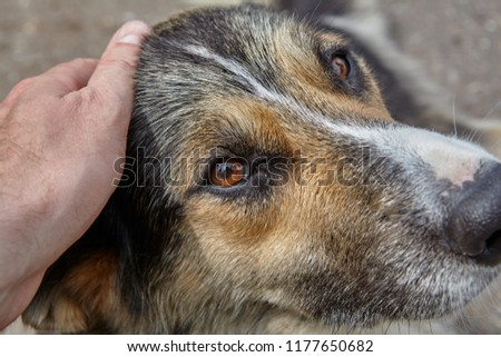 Human hand caresses dog, stroking it on head, close-up. #1177650682