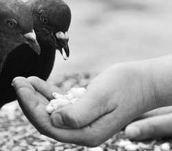 Human hand feeding the bird.