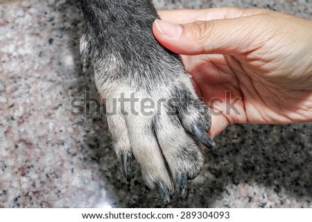 human hand hold dog hand. Isolated on granite floor background.
