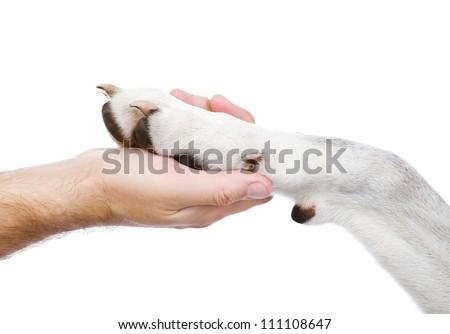 Human hand holding dog paw. isolated on white background