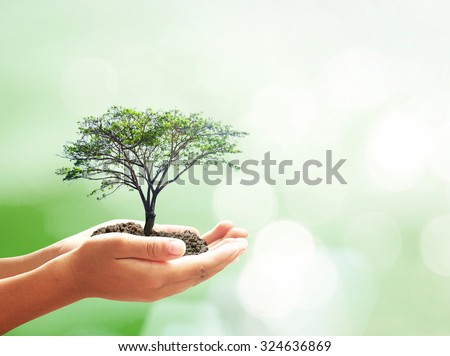 Human hand holding medium plant with soil on blur abstract bokeh beautiful sea, ocean, green forest, desert over colorful sunset background. Ecology, World Environment, Tree of Knowledge concept.