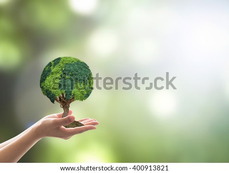 Human hand holding perfect growing tree plant on blur natural background greenery leaf: Arbor reforestation sustainable bio eco forest saving environment harmony ecosystem conservation csr campaign