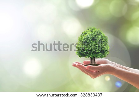 Human hand holding perfect growing tree plant on blurred natural bokeh background of greenery leaves: Reforestation, sustainable forest, saving environment and harmony ecosystems conservation campaign