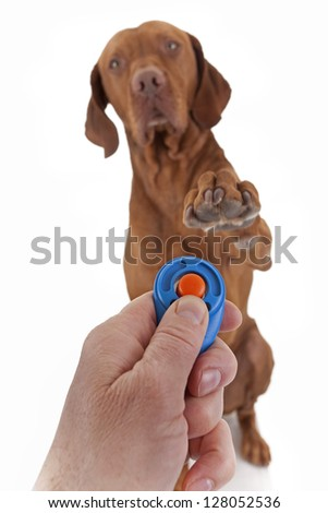 human hand holding training clicker with a dog in the background holding paw obediently  in air on white background