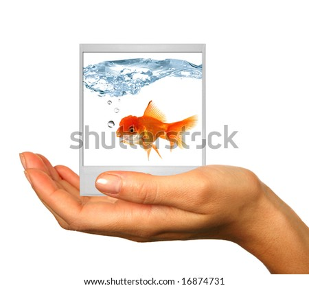 Human Hand Isolated on White With instant photo Film Photograph of Goldfish. Insert Your Own Image