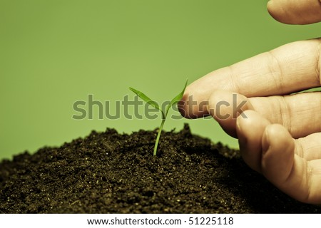 Human hand touching a young plant. Unity with nature; harmony concept