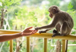 Human hand touching little monkey's paw at Temple in Saraburi, Thailand. Human shake hand with animal. Connection and protection rescue concept. Giving trust, love, care & friendship. Wildlife - Image