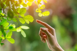 human hand touching pointing finger to nature green leaf nature ecology