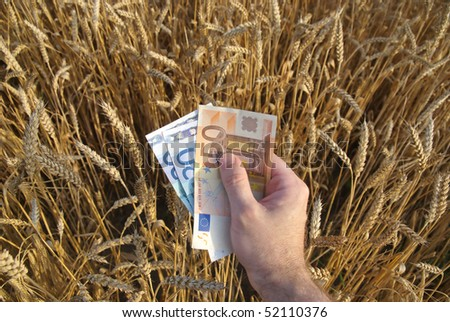 Human hand with euros in wheat field
