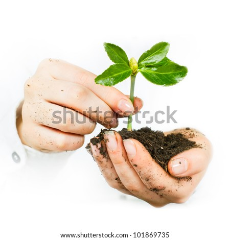 Human hands giving support to a small plant that grows.