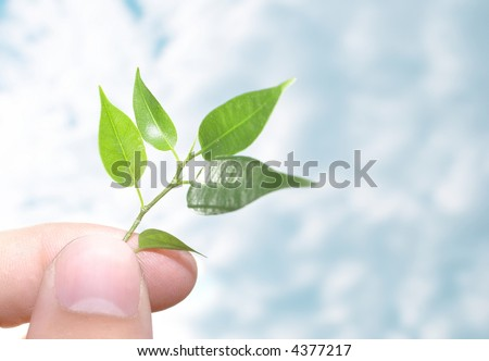 Human hands hold and preserve a young plant - stock photo