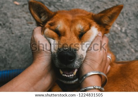 Human hands holding adorable dog face. Funny dog's face. Friendship of dog and human. #1224831505