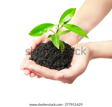 Human hands holding green small plant new life concept - Shutterstock ID 377951629