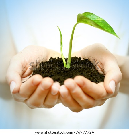 Human hands holding green small plant new life concept.