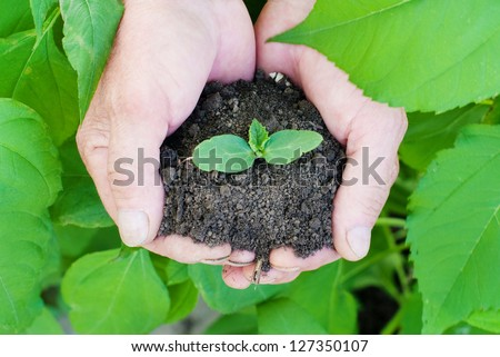 Human hands holding green small plant. New life concept, ecological concept