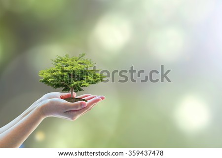 Human hands holding perfect growing tree plant on blur natural background greenery leaf: Arbor reforestation, sustainable bio eco forest saving environment, harmony ecosystem conservation csr campaign