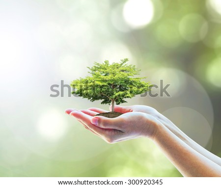 Human hands holding perfect growing tree plant on blurred natural bokeh background of tree leaves: Reforestation, sustainable forest, saving environment and building ecosystem conservation campaign