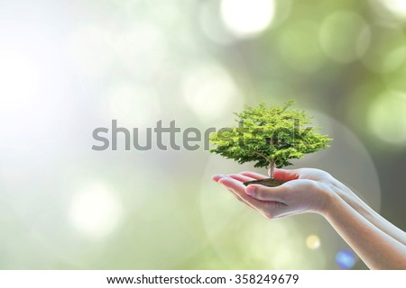 Human hands holding perfect growing tree plant on natural background greenery leaves: Arbor reforestation, sustainable bio forest, saving environment & harmony ecosystems conservation csr campaign