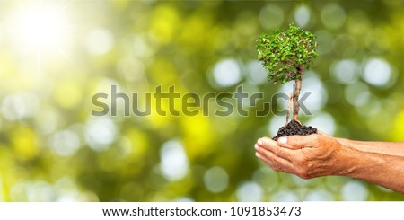 Human hands holding plants #1091853473