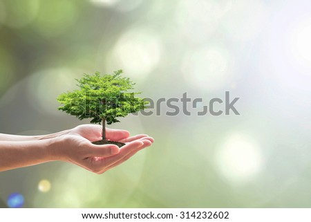 Human hands holding soil growing green tree plant on blur natural background of light greenery leaves: Reforestation, saving environment and eco/ ecosystem conservation campaign: Tree of life concept