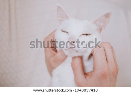 Human hands stroking the face of a white cat close-up. The concept of love for pets, of the cat's trust in man. Stock photo ©