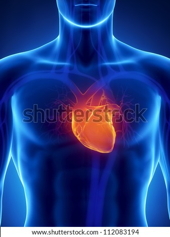 Human heart anatomy     **** Also as footage available in my portfolio