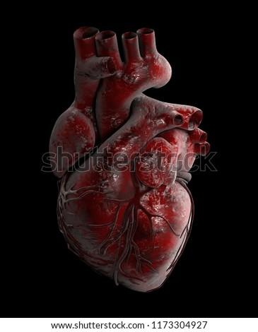 Human Heart - Anatomy of Human Heart 3d Illustration.