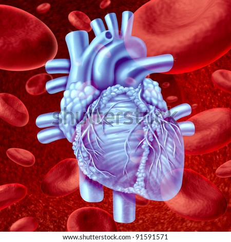 Human Heart Blood Flow anatomy with microscopic red blood cells flowing in an artery or vein as a human circulatory system medical health care symbol of an inner cardiovascular organ.