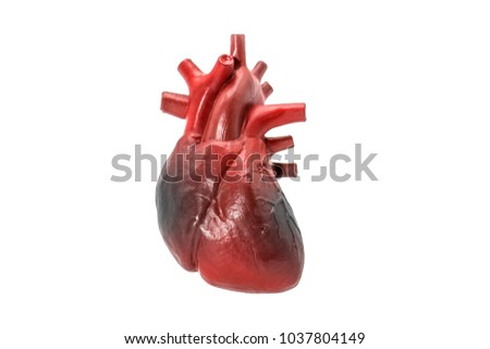 Human heart disease model on white background #1037804149