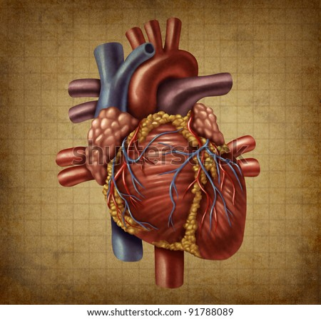 Human heart in as an old vintage grunge medical document texture in a vintage chart for blood circulation and inner organ function for health and medicine concept for cardiovascular diagnosis.
