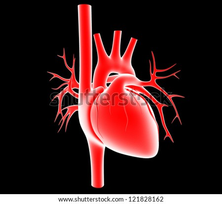 human heart isolated on black background