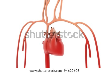 human heart isolated on white background