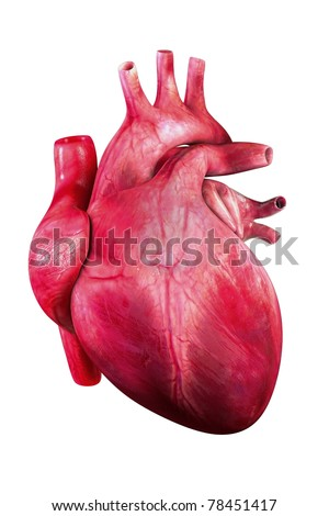 Human heart render/ heart human / isolated on white