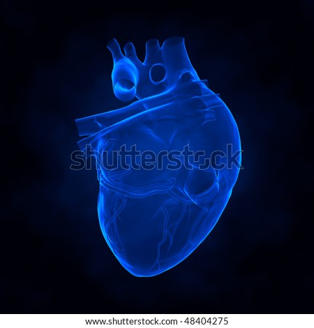 Human heart x-ray view