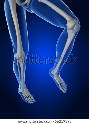 human knee illustration