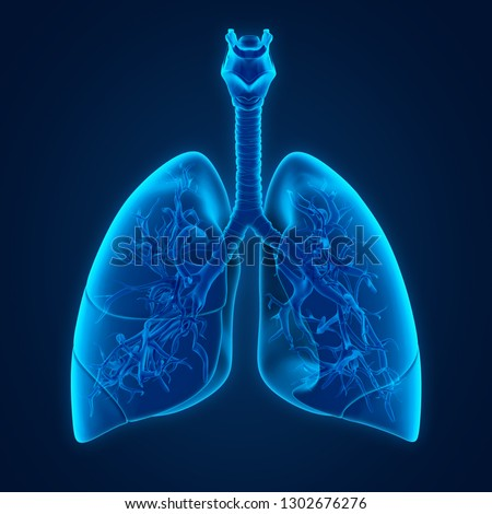 Human Lung Anatomy. 3D rendering