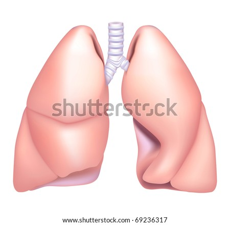 Human Lung, Bitmap copy
