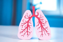 Human lungs on a blue background. Respiratory system. Part of the human body. Anatomy. Realistic drawing of the lungs. The lungs are in normal condition. Respiratory disease.