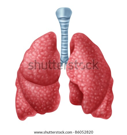 Respiratory system to provide oxygen to the body stock photo