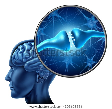 Human nerve cell synapse receptor with a human head and brain and a magnification of an anatomy  detail showing the biological function of neurons or neurological  and cognitive function on white. - stock photo